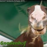 2016_Pferd1