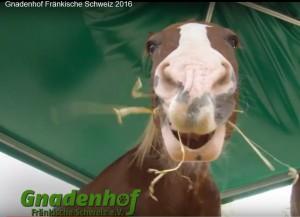 2016_Pferd4
